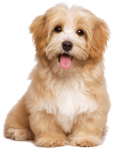 Online dating sites must love dogs