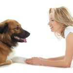 Katz on Dogs : A Commonsense Guide to Training and Living with Dogs