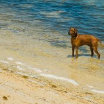 Visiting Key West, Florida with your pet