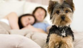 Must Love Dogs - Date My Pet
