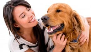 Dog Senses