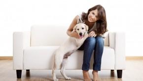Partner's Pet