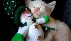 Kitten and Gift