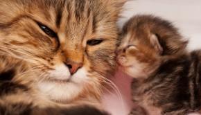 Love Of A Pet